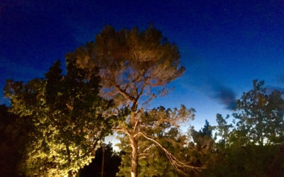 JARDIN FORESTIER A GRAMBOIS